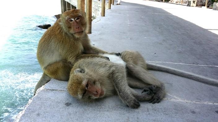 las playas de bangkok koh larn monos